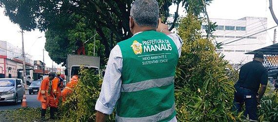 Manejo retira ervas-de-passarinho e sete árvores mortas da Avenida Castelo Branco