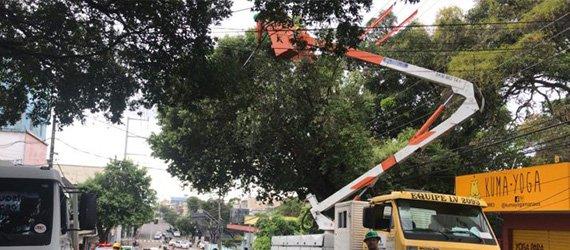 Árvores do centro de Manaus recebem ação de manejo