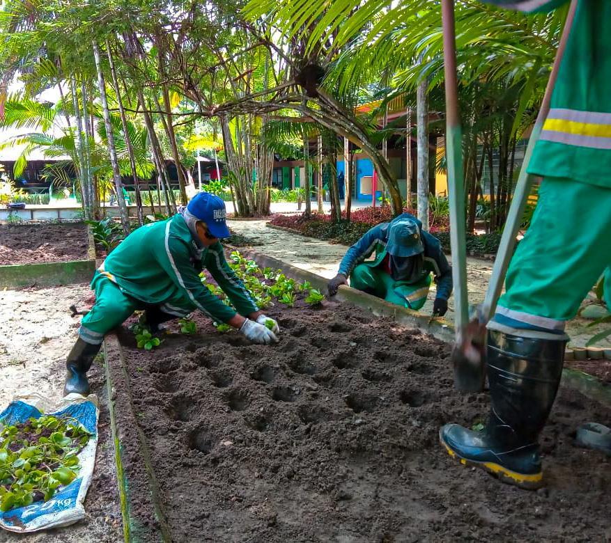 Prefeitura de Manaus constrói viveiro de plantas medicinais no Parque do Mindu